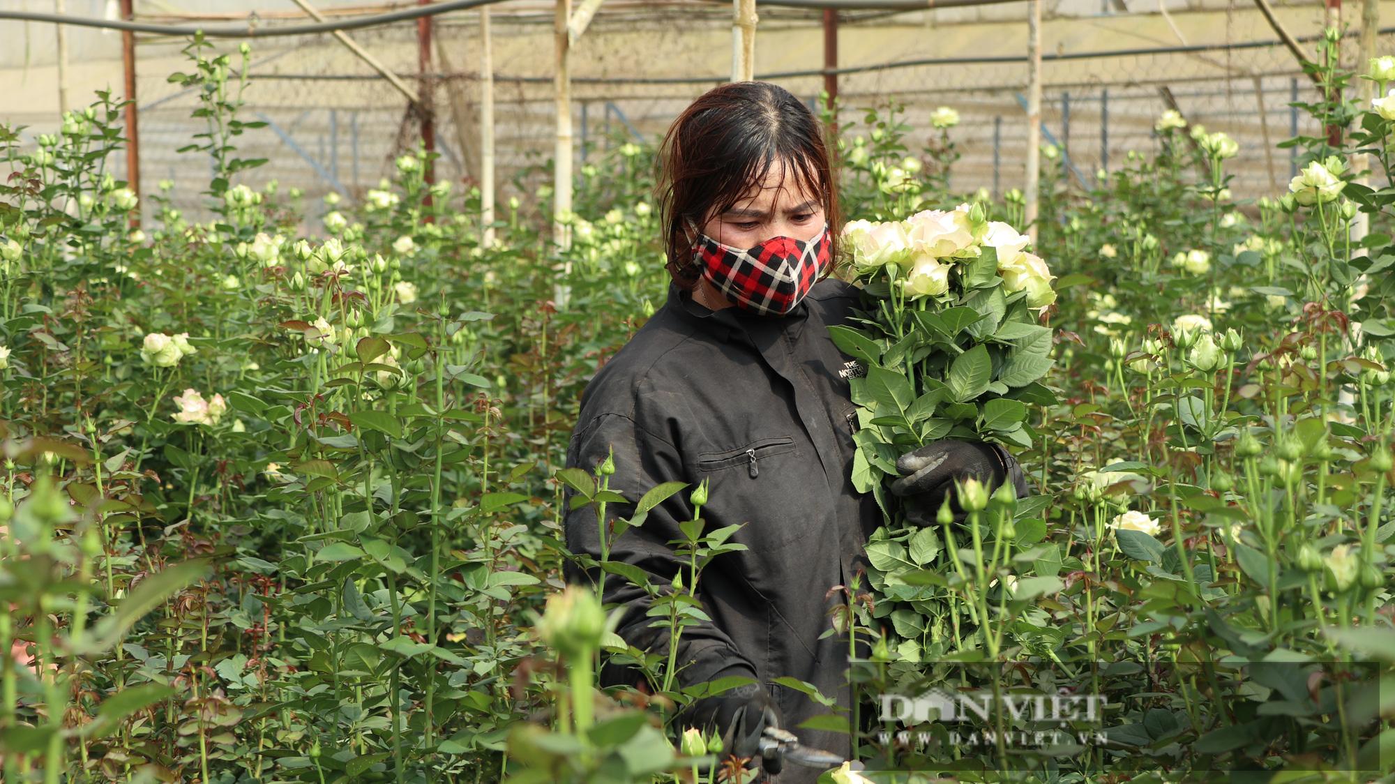 Lâm Đồng mong muốn TP.Hồ Chí Minh mở cửa chợ Đầm Sen để giúp tiêu thụ hoa Đà Lạt  - Ảnh 2.