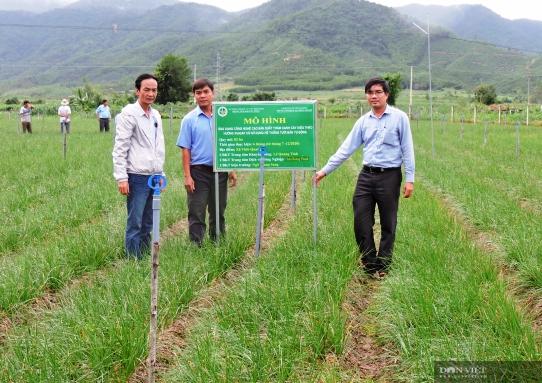 Trồng thứ củ trắng, lá xanh, nằm vùi dưới đất, nông dân miền núi Bình Định đón thành quả bất ngờ  - Ảnh 2.
