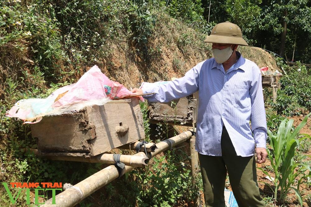 """Bí quyết bắt ong rừng """"đẻ"""" ra tiền của lão nông người Thái - Ảnh 1."""