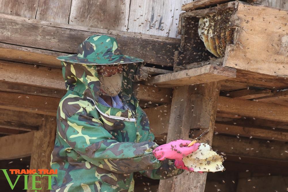 """Bí quyết bắt ong rừng """"đẻ"""" ra tiền của lão nông người Thái - Ảnh 2."""