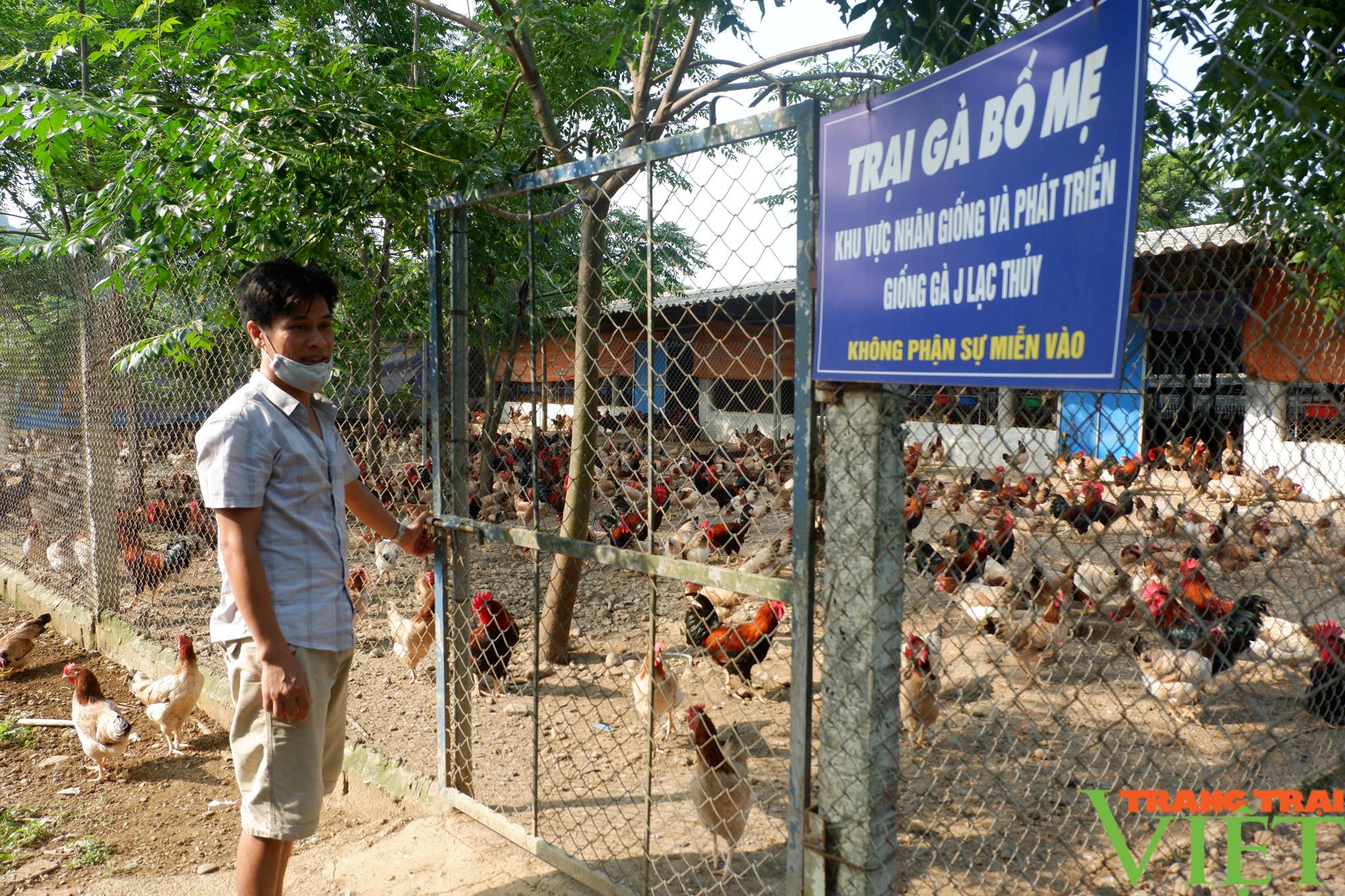 """Hòa Bình: Đệm lót sinh học là """"bí kíp"""" giúp nông dân chăn nuôi gà an toàn, thu tiền tỷ mỗi năm - Ảnh 1."""