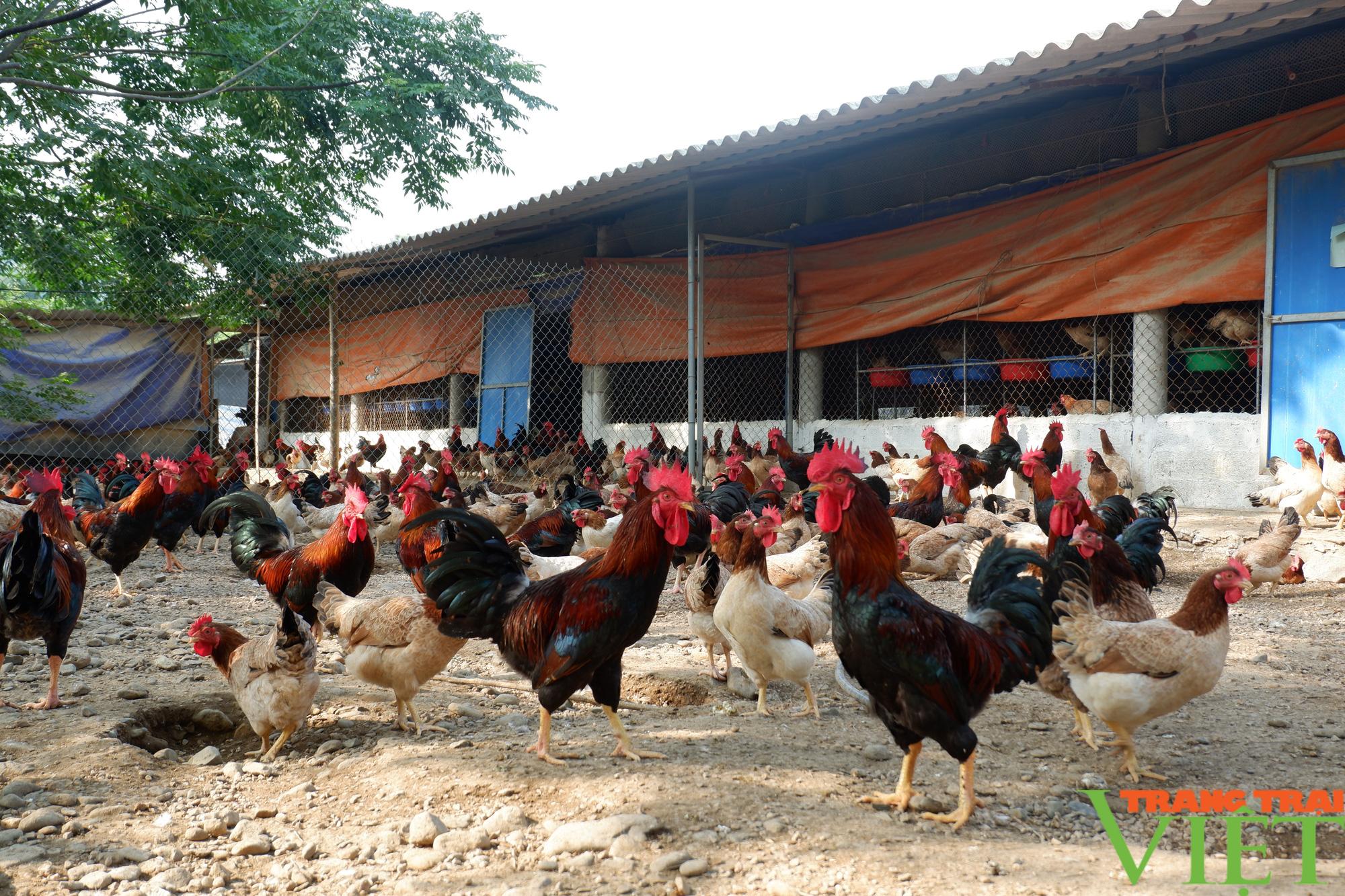 """Hòa Bình: Đệm lót sinh học là """"bí kíp"""" giúp nông dân chăn nuôi gà an toàn, thu tiền tỷ mỗi năm - Ảnh 4."""