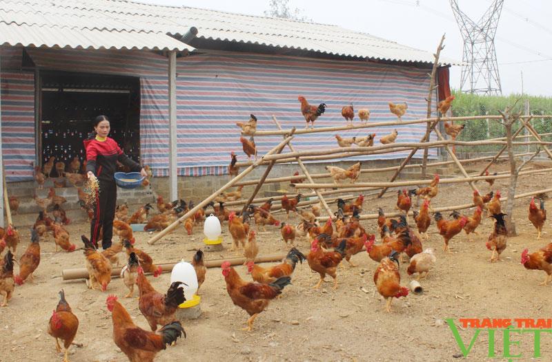"""Hòa Bình: Đệm lót sinh học là """"bí kíp"""" giúp nông dân chăn nuôi gà an toàn, thu tiền tỷ mỗi năm - Ảnh 5."""