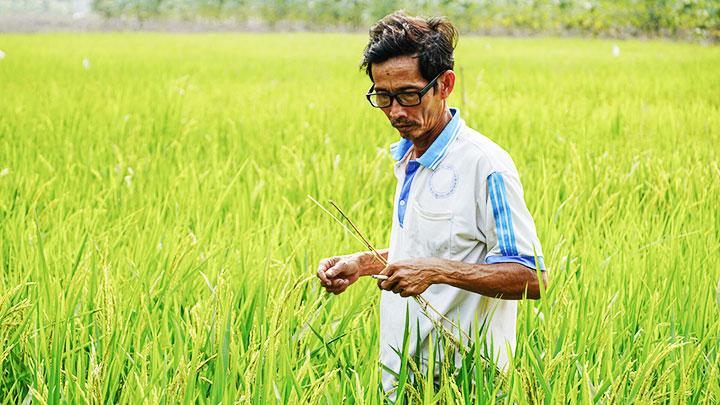 """""""Giảng viên nông dân"""" tốt nghiệp lớp 6 có công lai tạo gần 60 giống lúa ở tỉnh An Giang là ai? - Ảnh 1."""