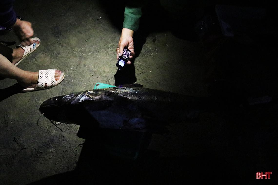 Hà Tĩnh: Hàng chục năm đi biển mới trúng mẻ cá hiếm gặp, ngư dân thu hàng trăm triệu đồng nhờ loài cá quý này - Ảnh 5.