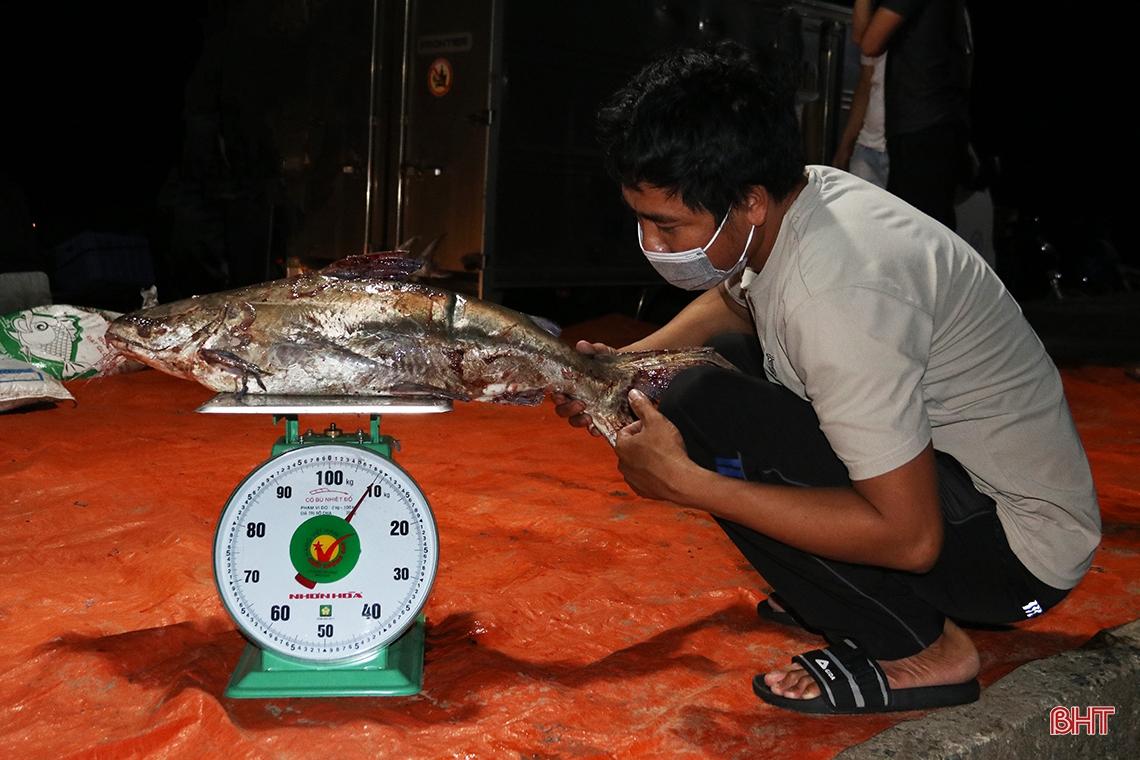 Hà Tĩnh: Hàng chục năm đi biển mới trúng mẻ cá hiếm gặp, ngư dân thu hàng trăm triệu đồng nhờ loài cá quý này - Ảnh 8.