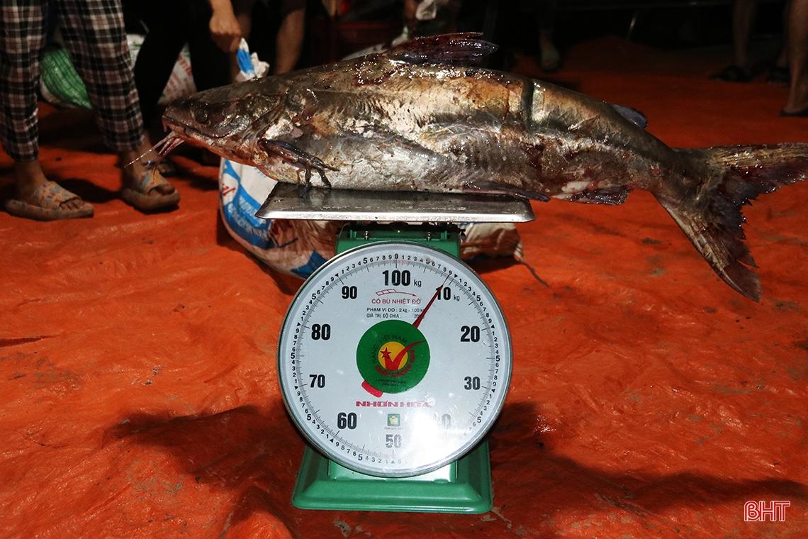 Hà Tĩnh: Hàng chục năm đi biển mới trúng mẻ cá hiếm gặp, ngư dân thu hàng trăm triệu đồng nhờ loài cá quý này - Ảnh 6.