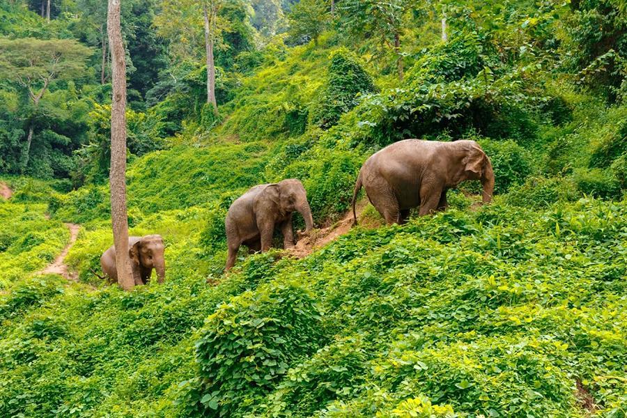 """Đàn voi rừng lang thang bí ẩn ở Trung Quốc thành """"sao"""" thế giới - Ảnh 16."""