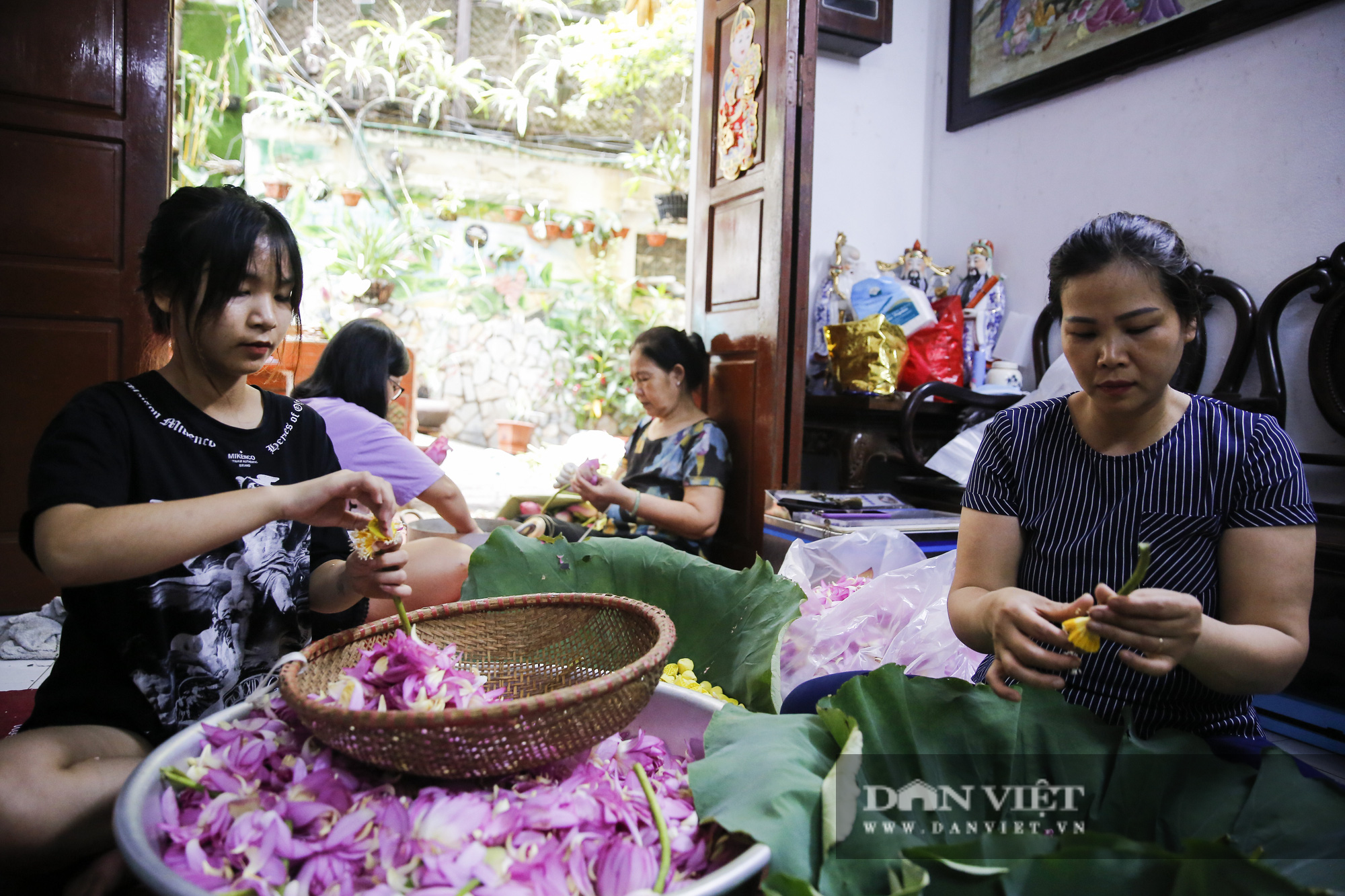 Tận mắt xem quy trình ướp trà sen đắt nhất Việt Nam - Ảnh 1.
