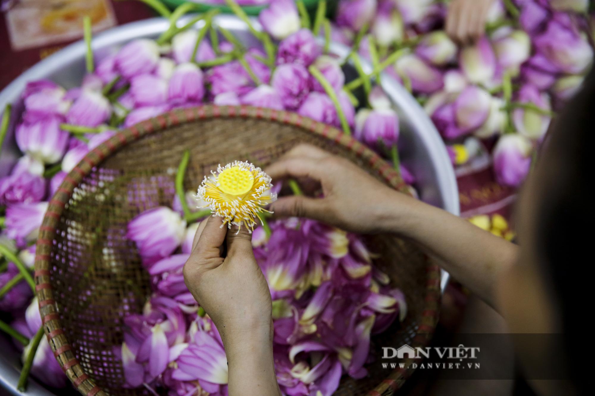 Tận mắt xem quy trình ướp trà sen đắt nhất Việt Nam - Ảnh 3.