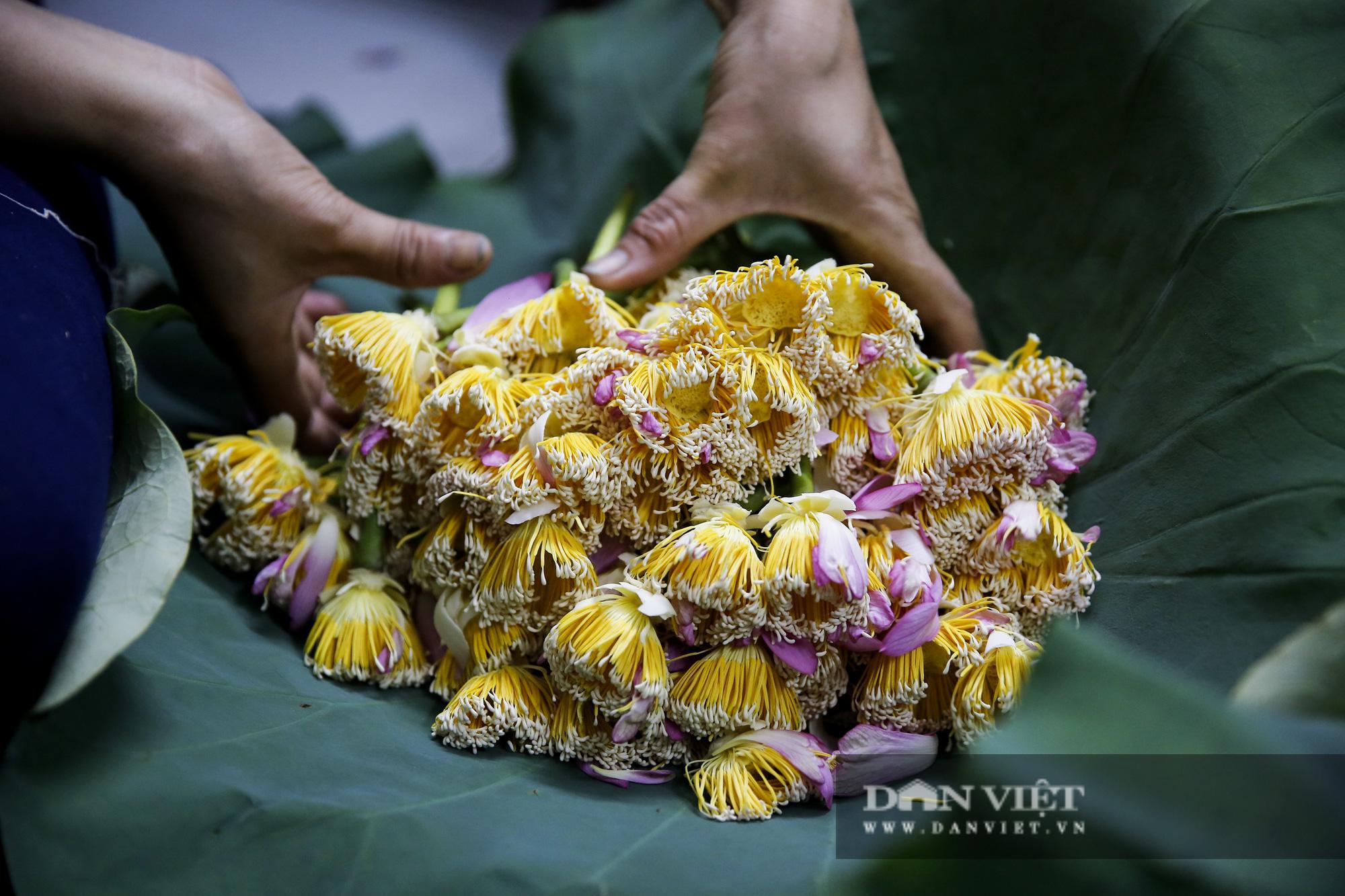 Tận mắt xem quy trình ướp trà sen đắt nhất Việt Nam - Ảnh 7.