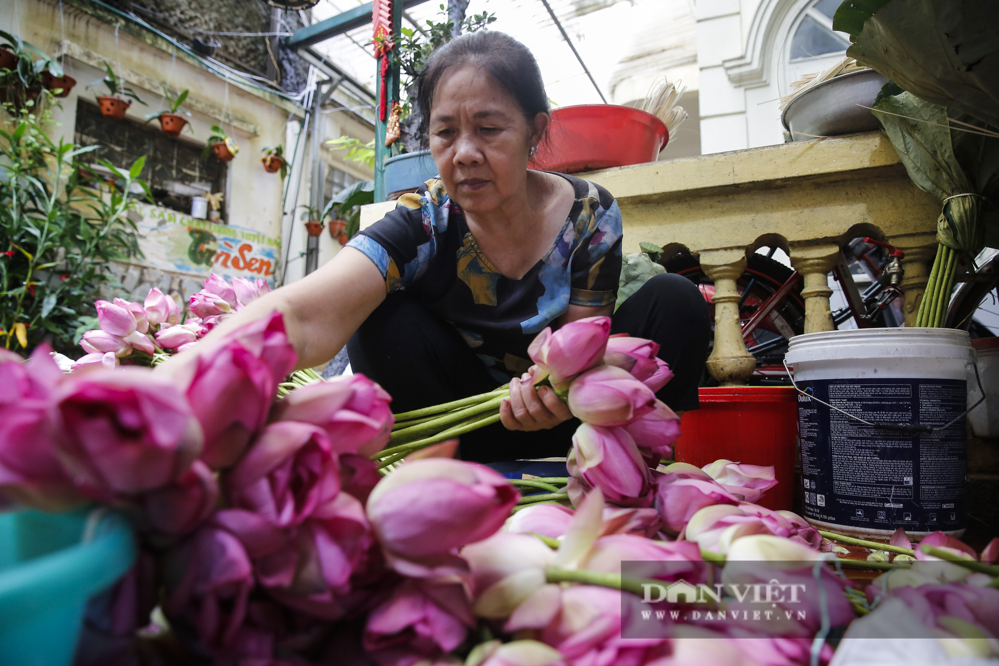 Tận mắt xem quy trình ướp trà sen đắt nhất Việt Nam - Ảnh 8.