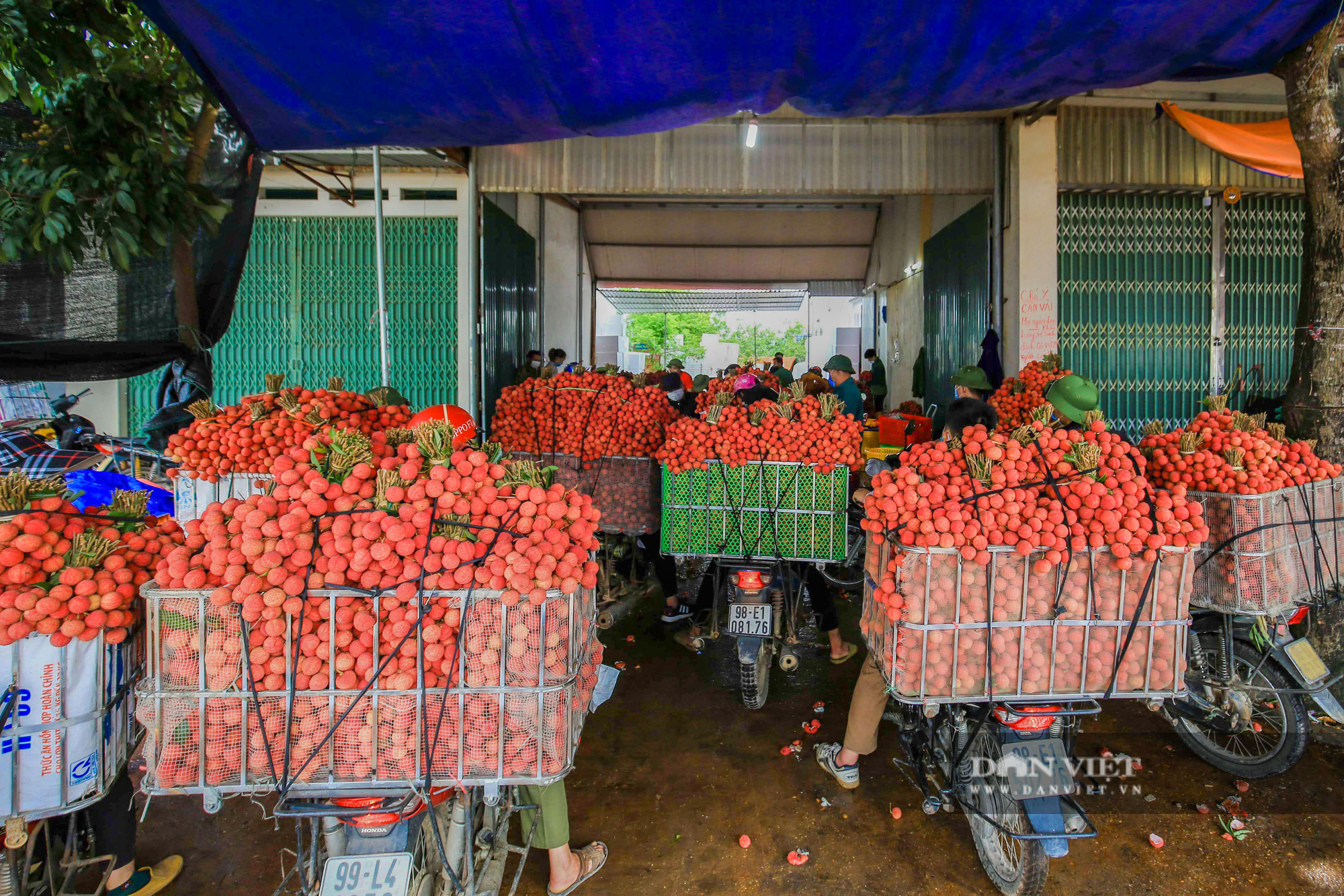 Vải thiều chín rộ đỏ ửng theo lưng nông dân đi tiêu thụ - Ảnh 11.