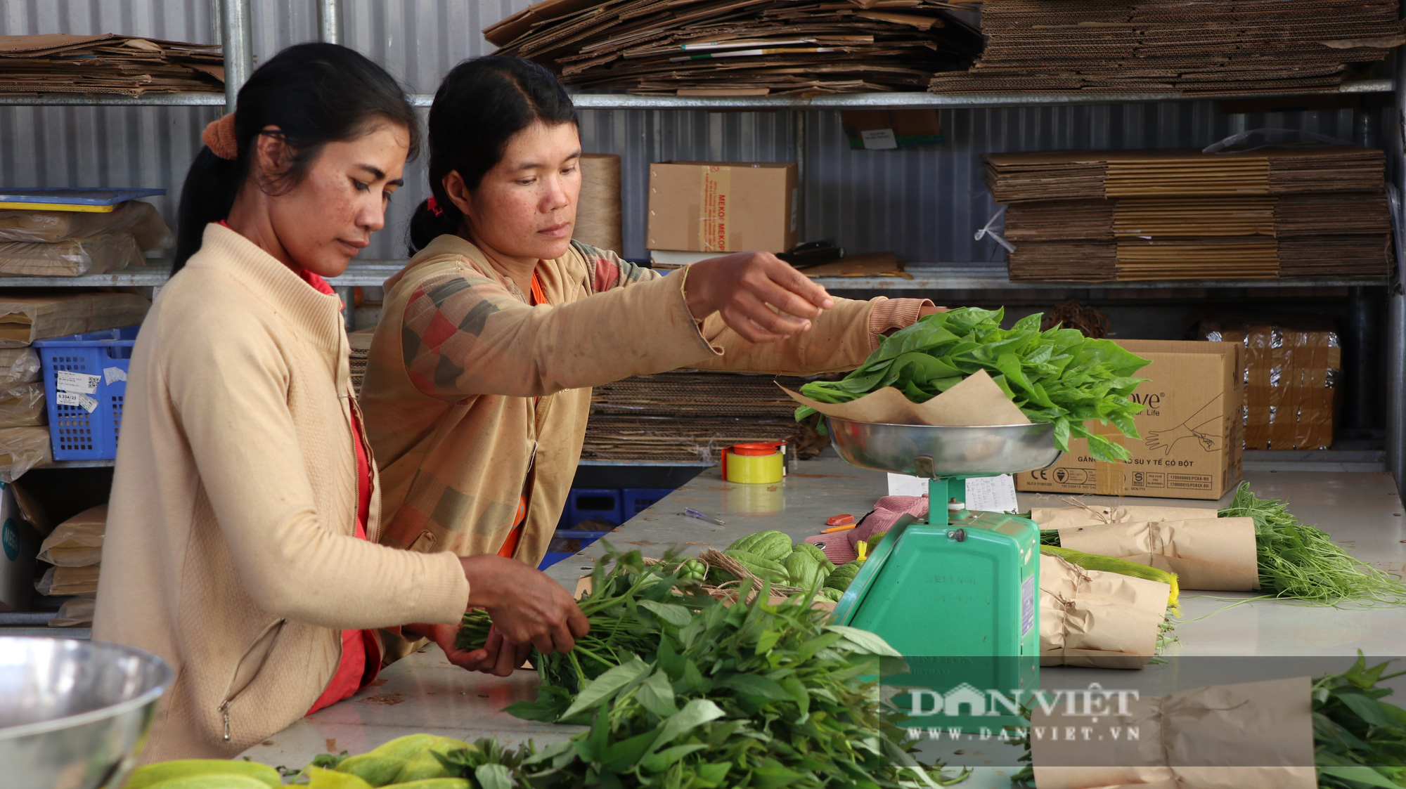 Về Ma Đanh xem các mẹ người Churu làm rau hữu cơ, bán giá cao không lo Covid-19 - Ảnh 2.