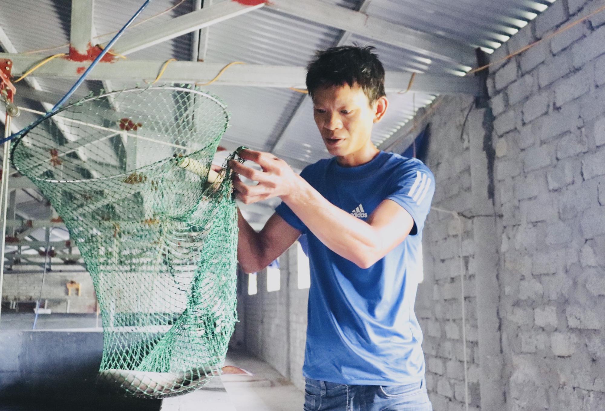 """Quảng Bình: Nuôi loài cá """"ngày ngủ đêm ăn"""" mấy tháng thu tiền tỷ - Ảnh 1."""