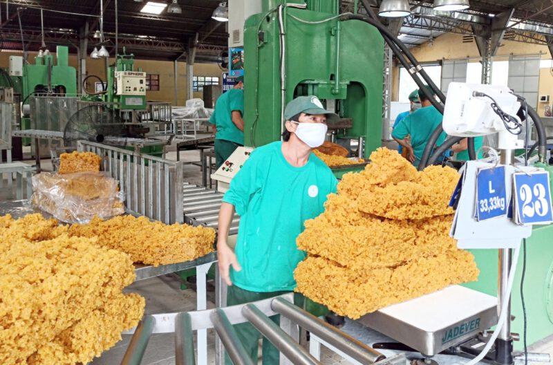 Trung Quốc, Mỹ chi tỷ đô mua vàng trắng Việt Nam, doanh nghiệp cao su báo lãi khủng chưa từng có - Ảnh 1.