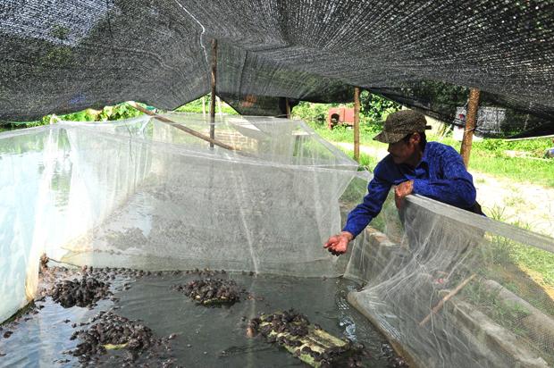 """Hà Giang: """"Vua trồng rừng"""" có 450ha đất, nhưng khi nuôi la liệt con đặc sản thì người người lại kéo tới xem - Ảnh 2."""