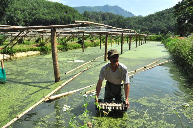 """Hà Giang: """"Vua trồng rừng"""" có 450ha đất, nhưng khi nuôi la liệt con đặc sản thì người người lại kéo tới xem - Ảnh 1."""