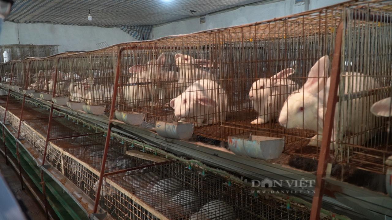 """Người nông dân cần mẫn làm """"bà đỡ"""" cho những chú thỏ - Ảnh 4."""