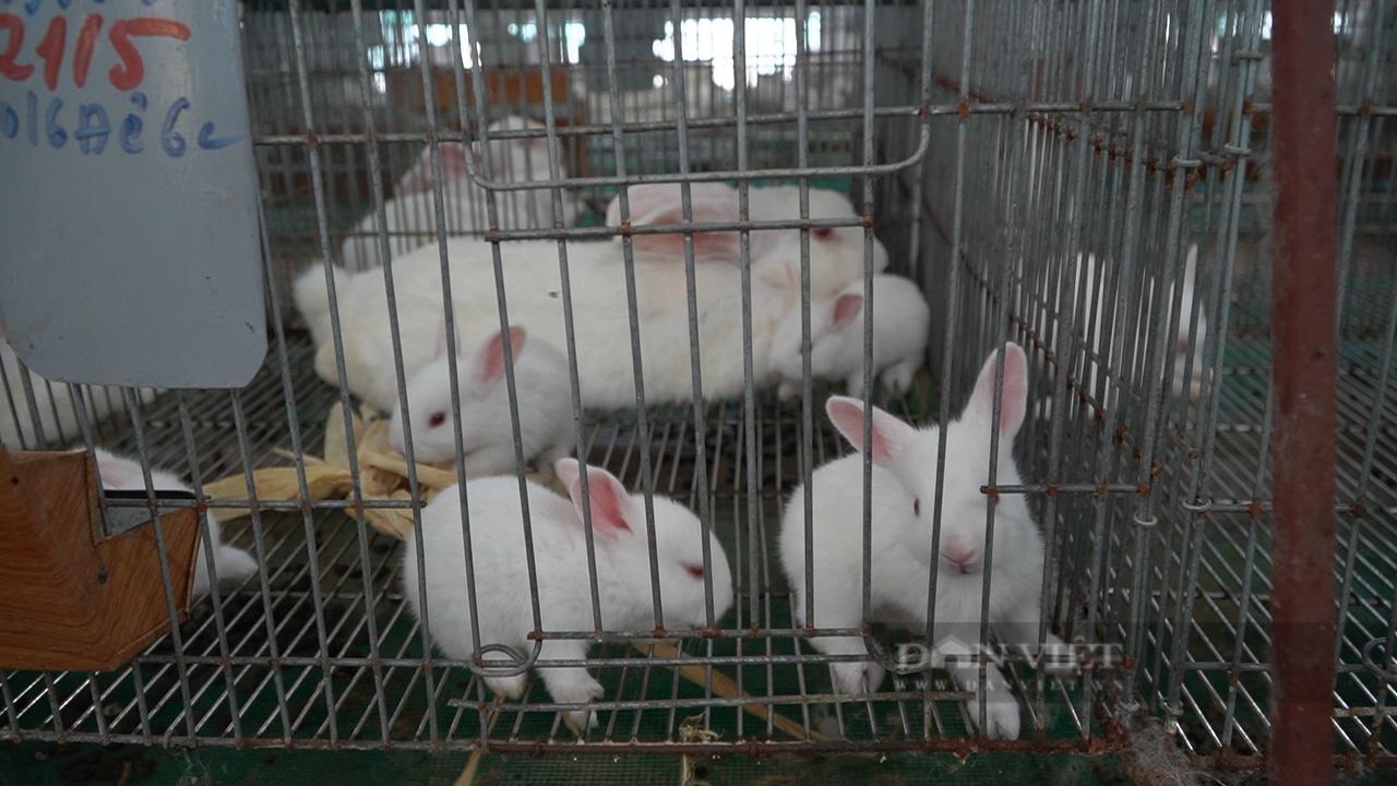 """Người nông dân cần mẫn làm """"bà đỡ"""" cho những chú thỏ - Ảnh 5."""