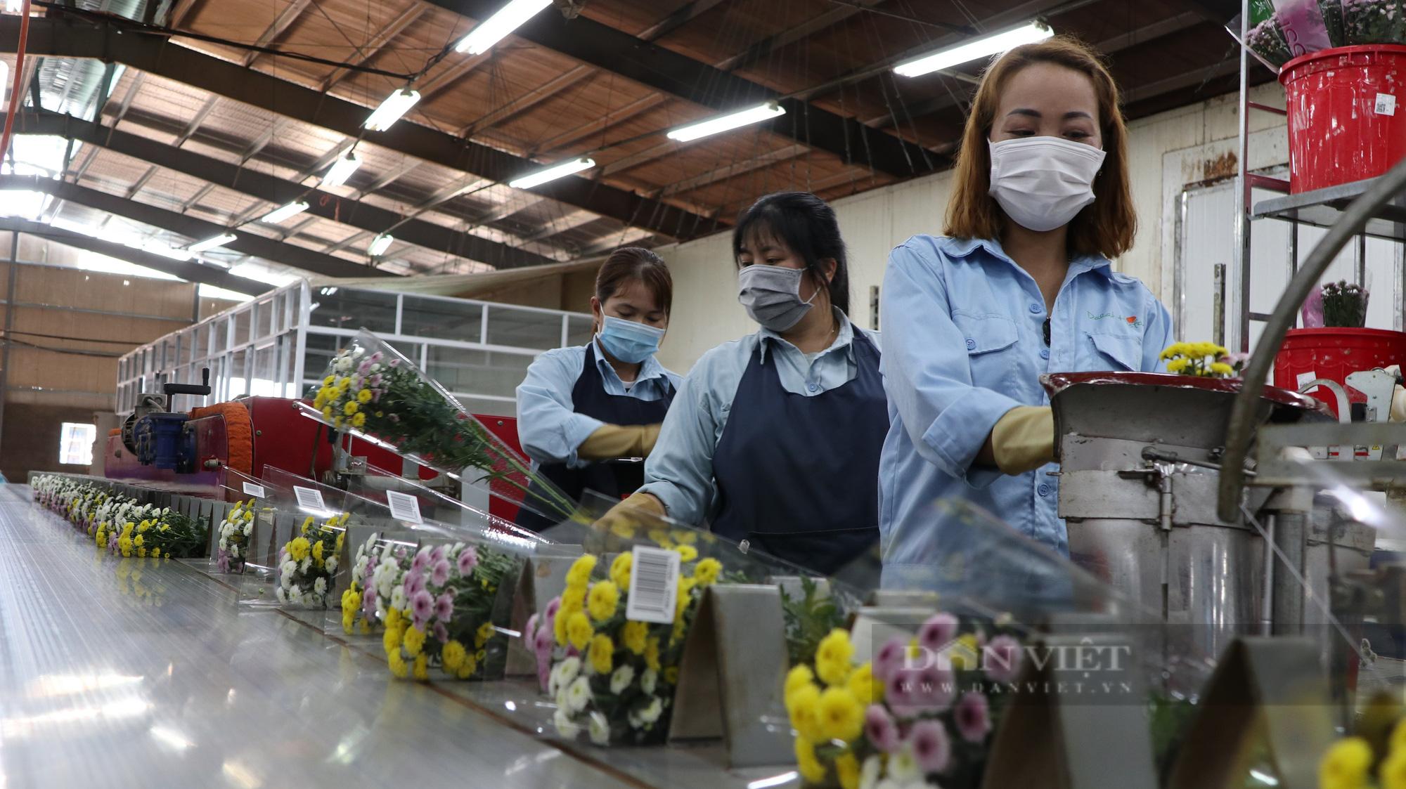 """Doanh nghiệp và người dân """"khóc ròng"""" vì hàng trăm nghìn cành hoa xuất khẩu bị trả ngược - Ảnh 4."""
