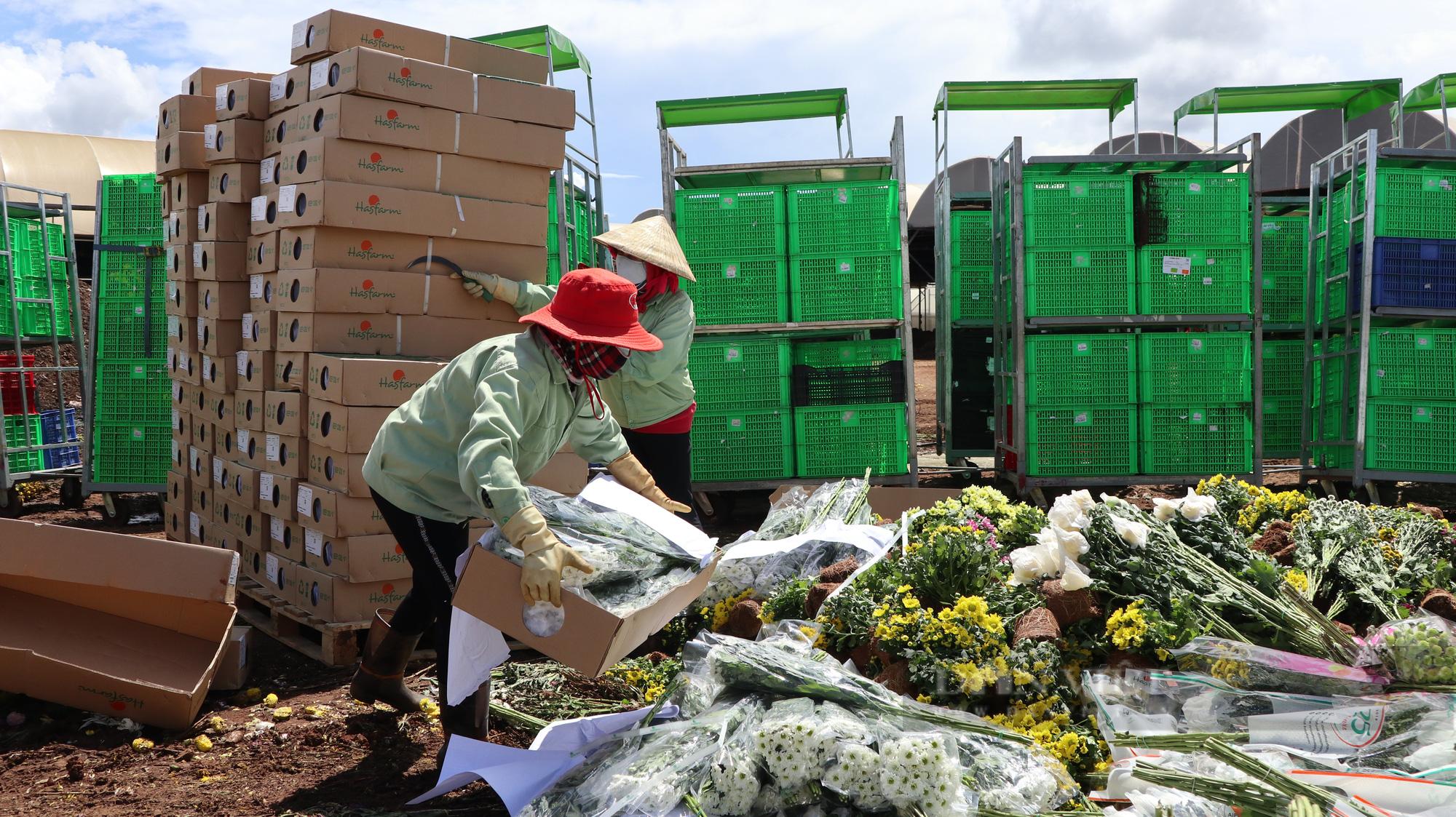 """Doanh nghiệp và người dân """"khóc ròng"""" vì hàng trăm nghìn cành hoa xuất khẩu bị trả ngược - Ảnh 5."""
