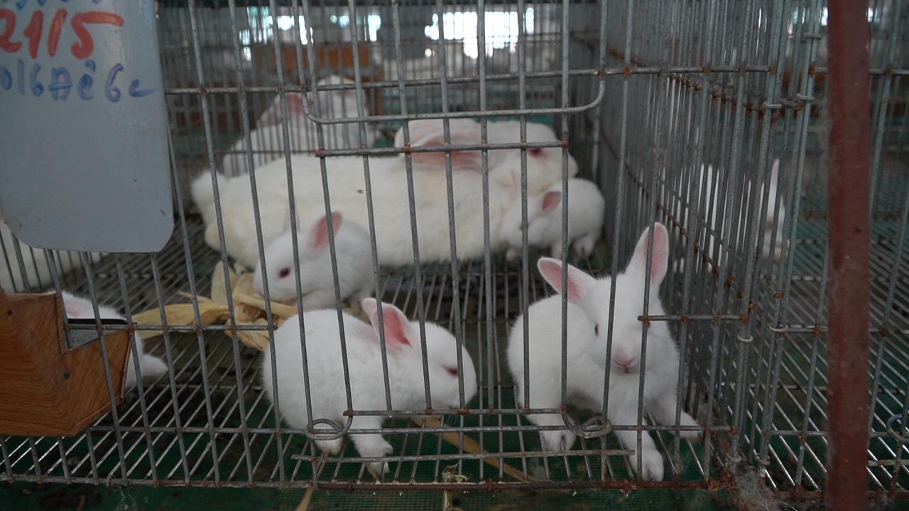 Bí quyết làm chuồng thỏ của triệu phú nuôi thỏ vùng Đan Phượng  - Ảnh 6.