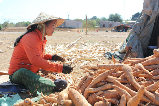 Mỹ, Nhật Bản, Trung Quốc chi 15,6 tỷ USD mua nông sản Việt Nam - Ảnh 3.