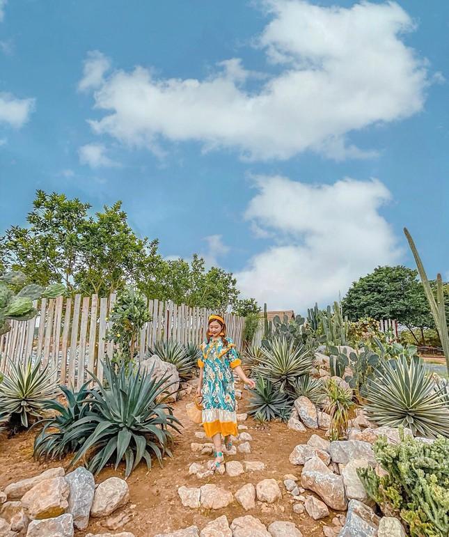 Khu vườn xương rồng đẹp không góc chết giữa lòng Hà Nội cho bộ ảnh lãng mạn giữa hoang mạc - Ảnh 12.