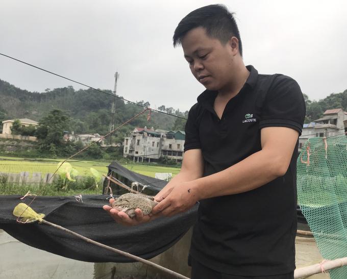 Anh thanh niên Bắc Kạn điển trai đi nuôi ốc nhồi + ếch thu nhập nhẹ nhàng hơn trăm triệu đồng mỗi năm - Ảnh 2.