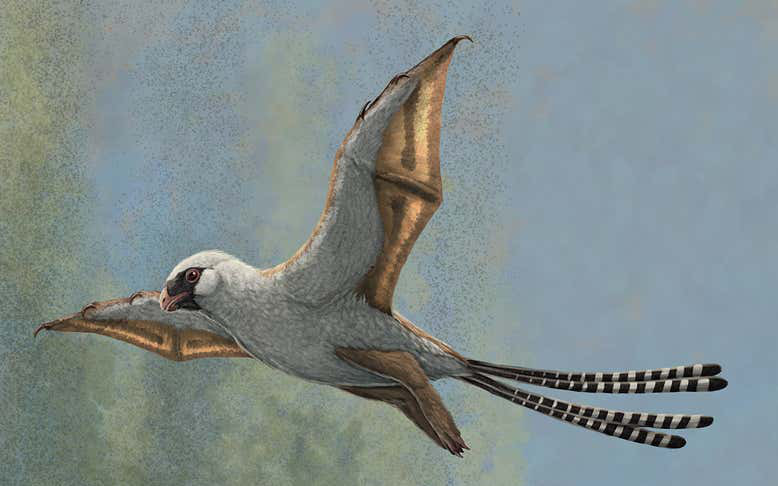Phát hiện một loài chim đặc biệt sống cách đây 160 triệu năm