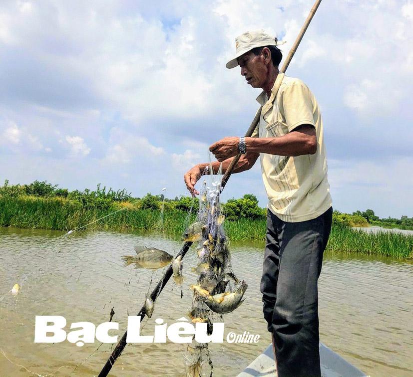 Bạc Liêu: Ở nơi này nông dân cho tôm sú chung nhà với cá rô phi, cả 2 con đều khỏe, nuôi đâu trúng đó - Ảnh 1.