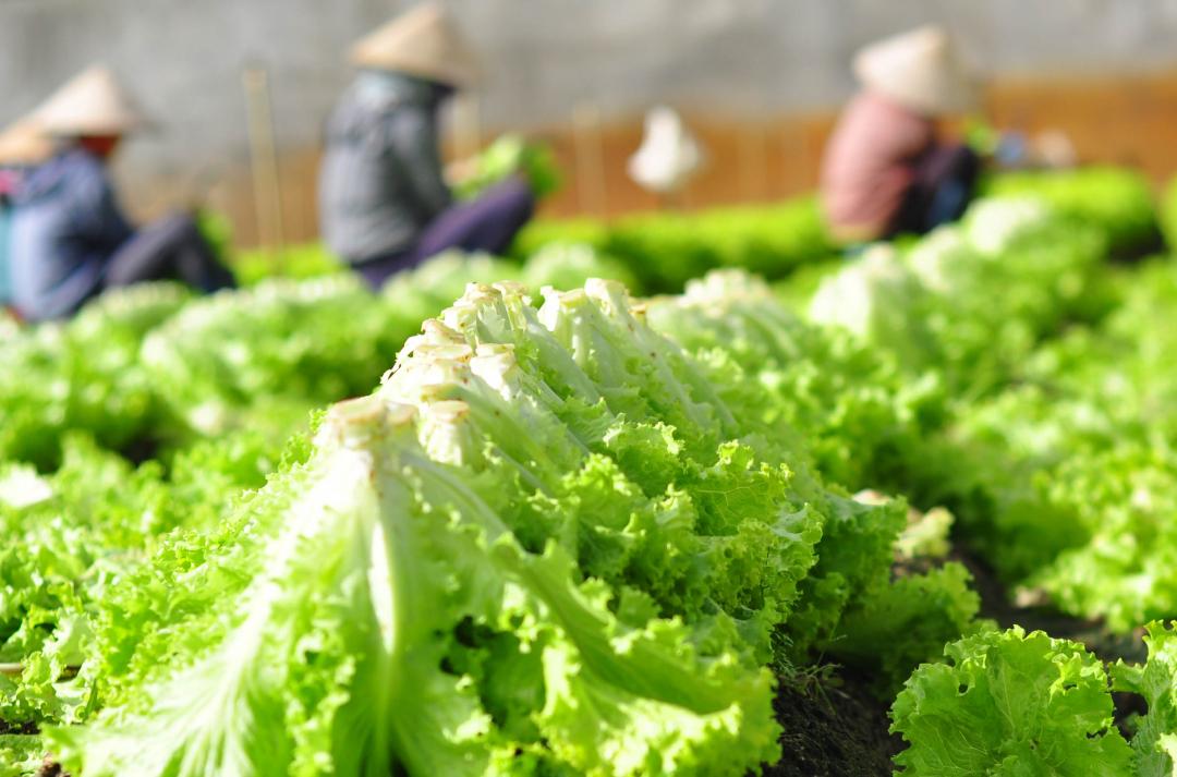 Liên Bộ Nông nghiệp - Công Thương họp khẩn tìm giải pháp cung ứng hàng hóa cho miền Nam - Ảnh 2.