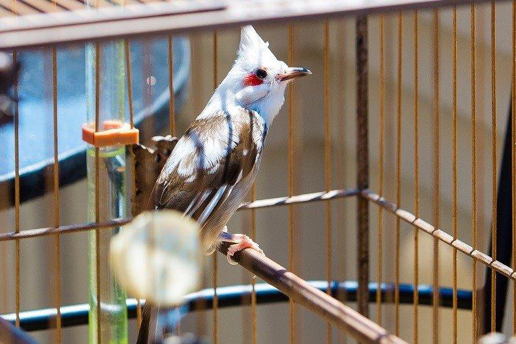 """Đàn chim cảnh 10 tỷ của ông chủ hãng may đô có tiếng ở Hà Nội: Ở điều hòa, có """"bảo mẫu"""" riêng - Ảnh 3."""