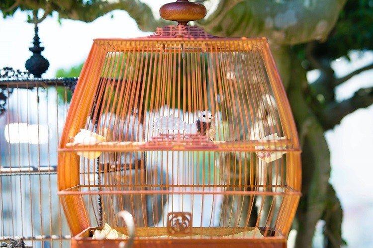"""Đàn chim cảnh 10 tỷ của ông chủ hãng may đô có tiếng ở Hà Nội: Ở điều hòa, có """"bảo mẫu"""" riêng - Ảnh 4."""