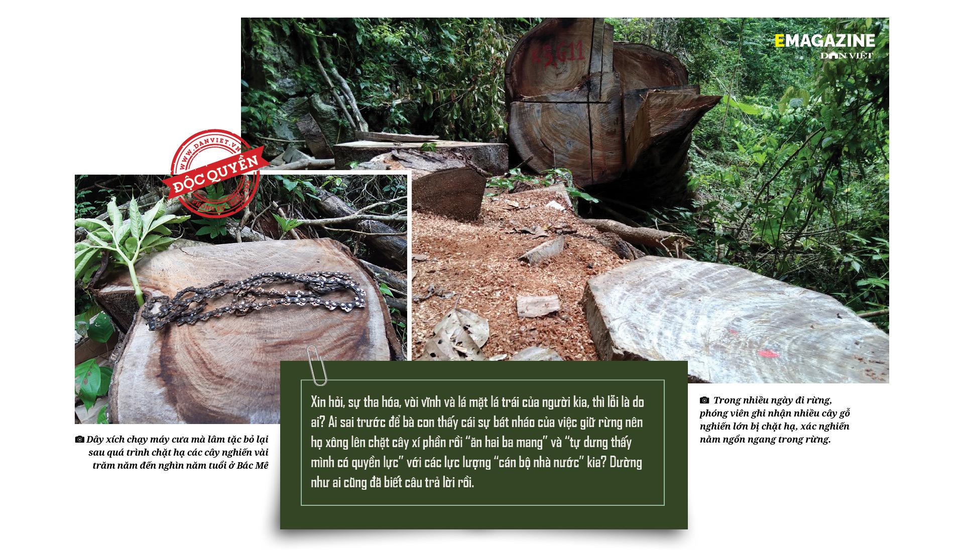 """Phía sau vụ """"thảm sát"""" rừng nghiến cổ thụ - Bài 3: Đấu trí với sự """"dắt mũi"""" của các chủ rừng - Ảnh 4."""