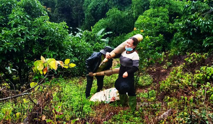 Nông dân Đắk Nông gom hàng trăm tấn nông sản hỗ trợ người dân vùng dịch - Ảnh 1.