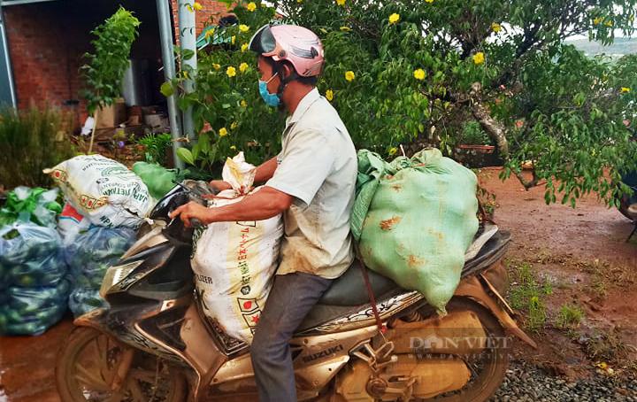 Nông dân Đắk Nông gom hàng trăm tấn nông sản hỗ trợ người dân vùng dịch - Ảnh 2.