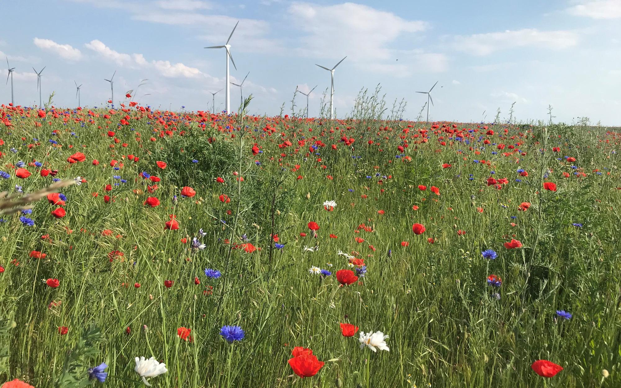 Bayer khởi động Chương trình giảm khí thải carbon trong ngành nông nghiệp châu Âu