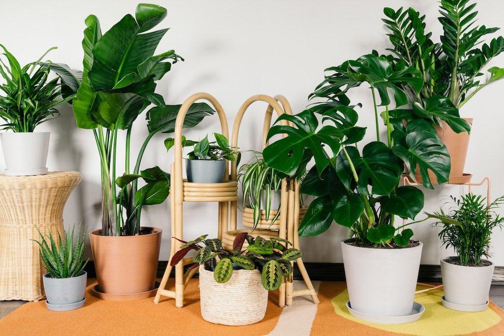5 lưu ý khi trồng cây xanh trong nhà để giải trừ vận xui, lộc tài tăng tiến - Ảnh 1.