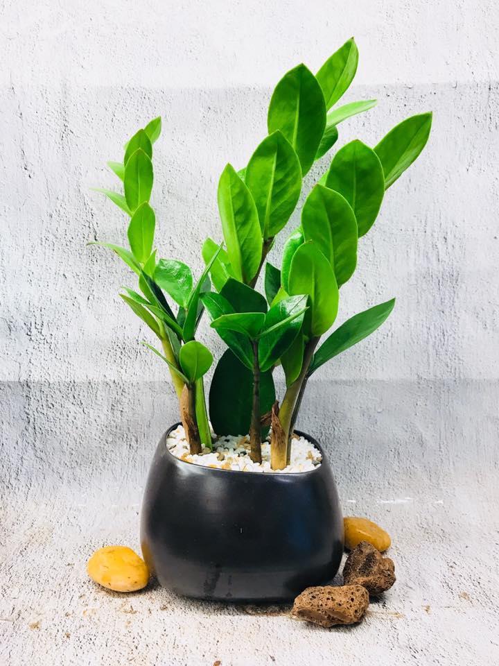 5 lưu ý khi trồng cây xanh trong nhà để giải trừ vận xui, lộc tài tăng tiến - Ảnh 2.
