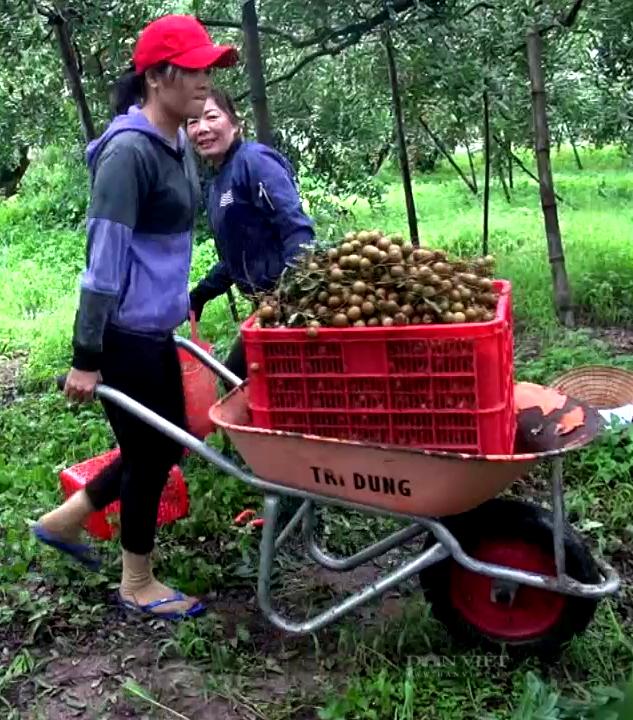 Bà Rịa – Vũng Tàu: Loại trái cây đặc sản muốn ăn phải săn lùng đang chín rộ, giá rẻ bèo - Ảnh 4.