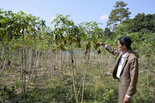 Việt Nam bán hết sắn cho Trung Quốc làm thức ăn chăn nuôi rồi chi 6 tỷ USD nhập ngô, đậu tương làm nguyên liệu - Ảnh 2.