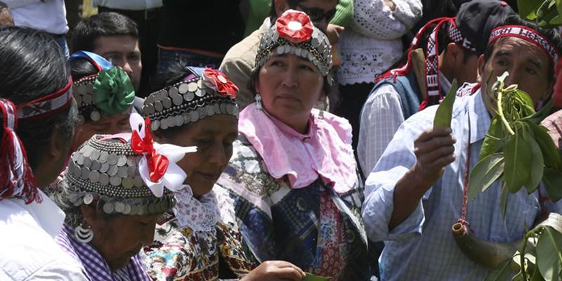 """Bộ lạc thổ dân Mapuche được săn đón với phương thuốc bí truyền """"tăng cường chuyện gối chăn"""" - Ảnh 5."""