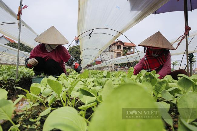Phòng chống dịch Covid-19: Hà Nội đảm bảo hàng hóa phục vụ nhân dân - Ảnh 2.