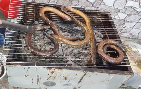 Giống lươn nhưng không phải là lươn, con đặc sản U Minh to hơn ngón tay cái này đem nướng ăn ngon tuyệt đỉnh - Ảnh 1.