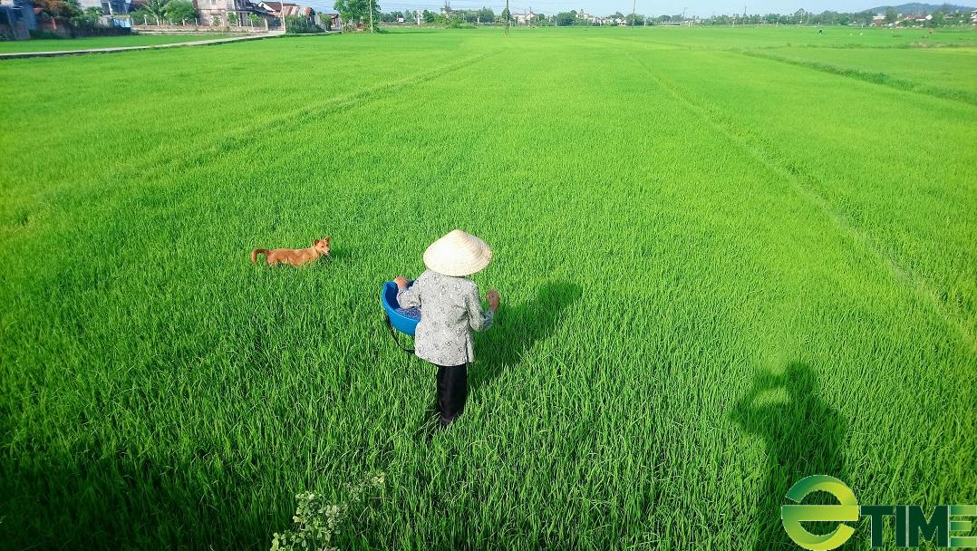 """Ảnh hưởng Covid-19, nông nghiệp Bình Định vẫn tăng trưởng """"ngoạn mục"""" - Ảnh 1."""