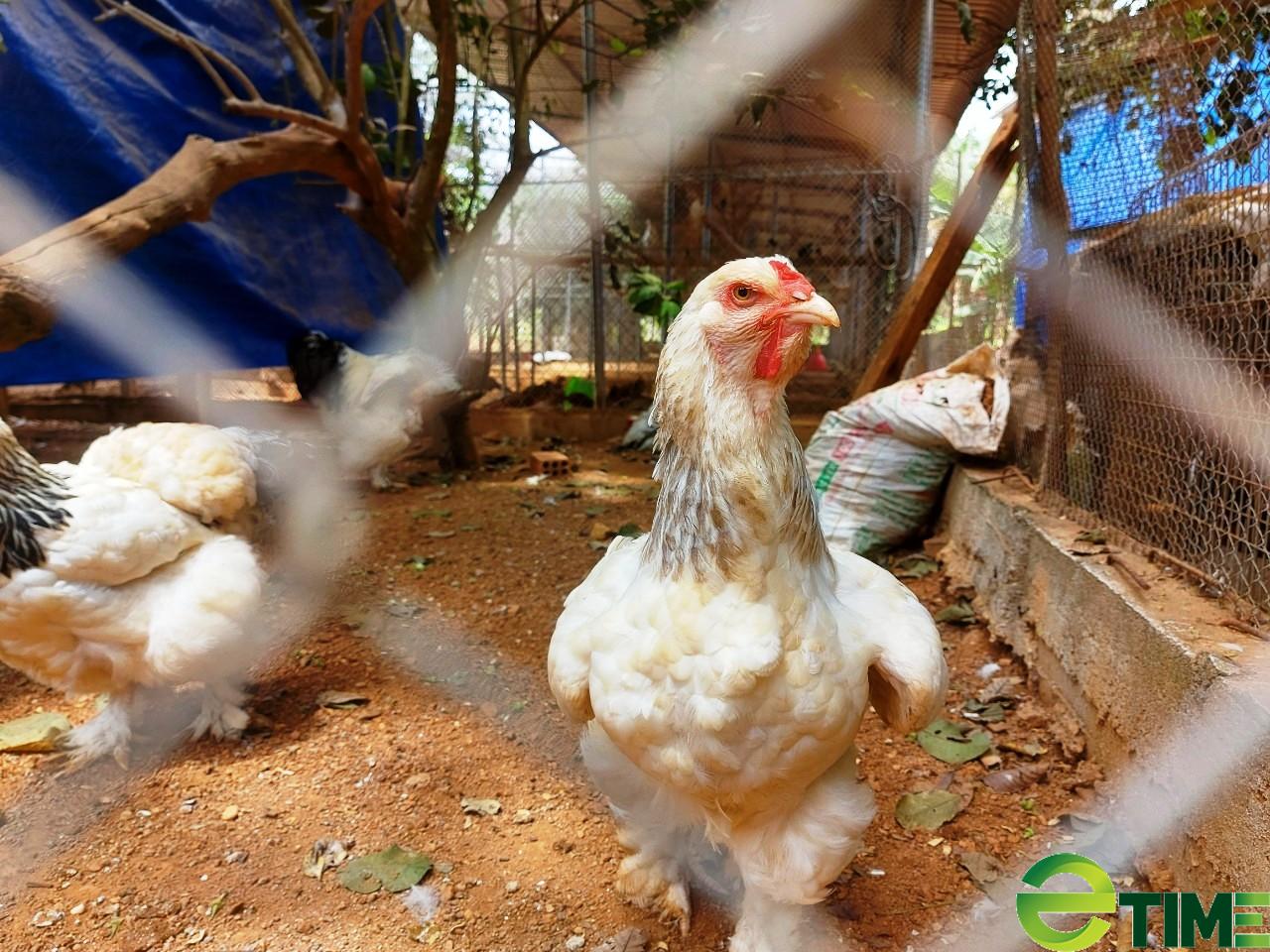 """Ảnh hưởng Covid-19, nông nghiệp Bình Định vẫn tăng trưởng """"ngoạn mục"""" - Ảnh 2."""