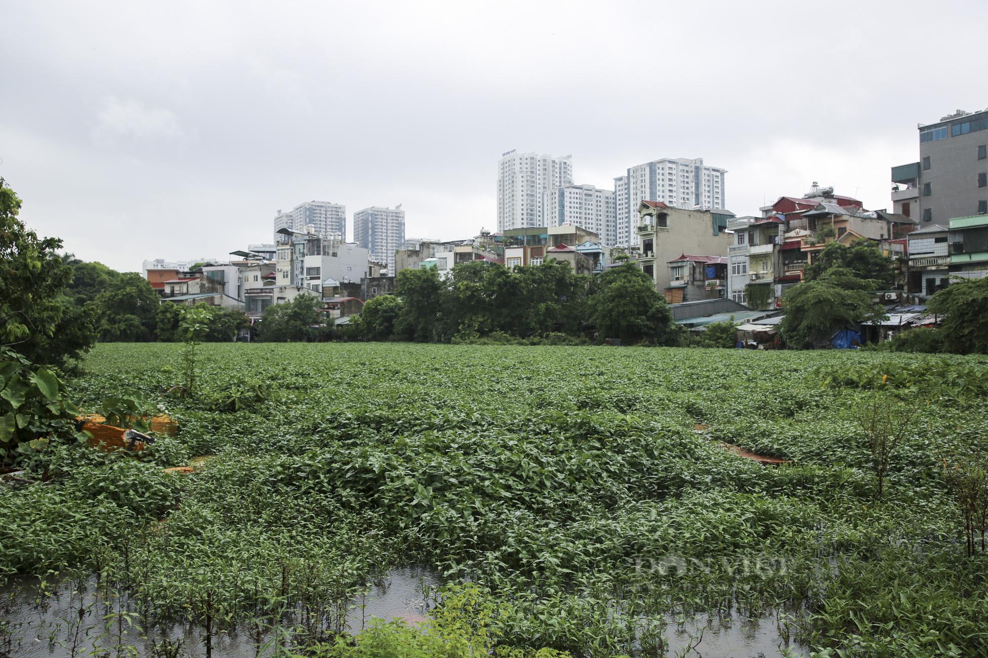 """""""Giậm chân tại chỗ"""" 7 năm, một hồ nước giữa trung tâm Hà Nội bị xâm lấn, ô nhiễm nặng - Ảnh 1."""