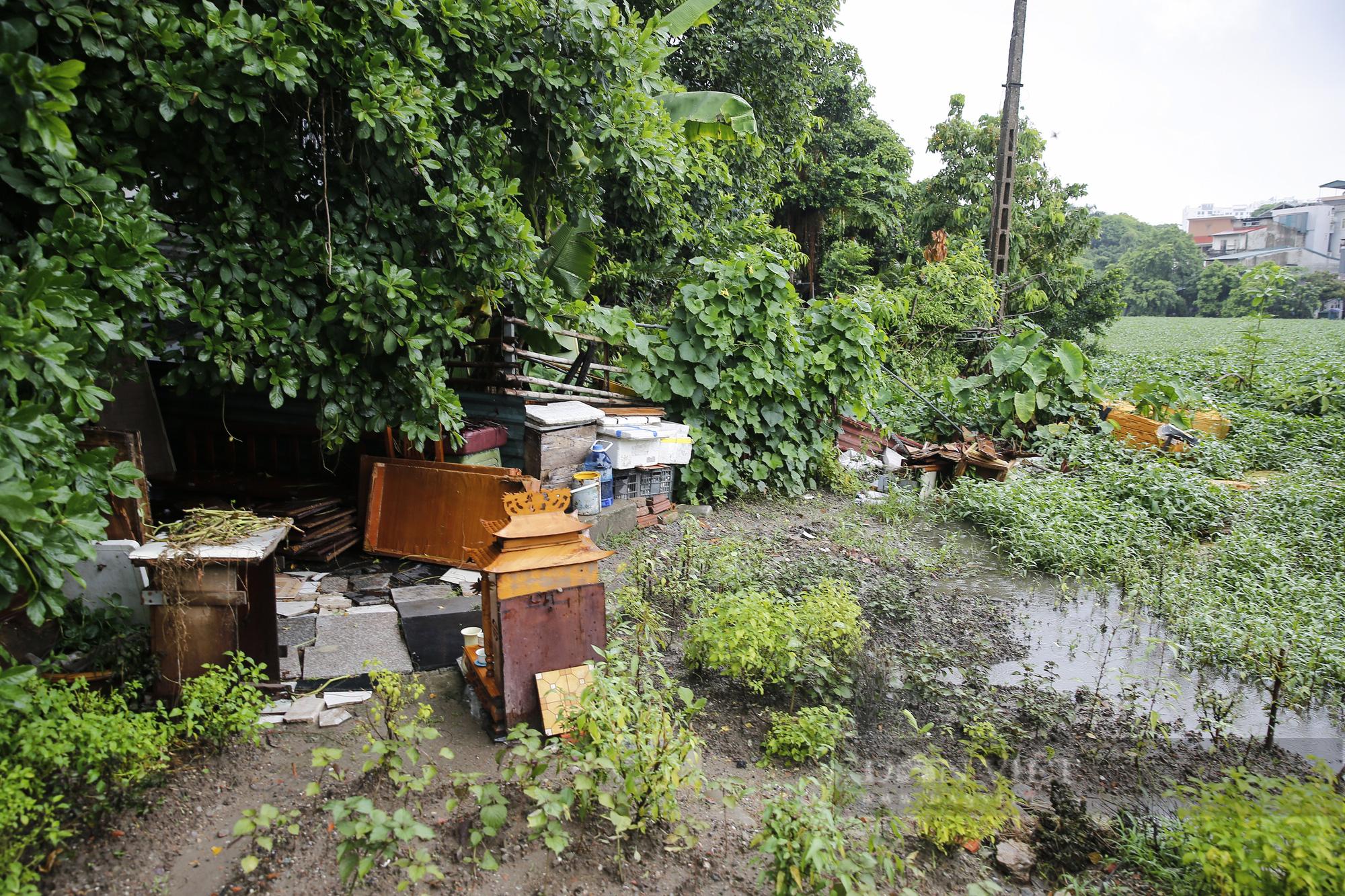 """""""Giậm chân tại chỗ"""" 7 năm, một hồ nước giữa trung tâm Hà Nội bị xâm lấn, ô nhiễm nặng - Ảnh 3."""